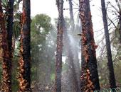 السيطرة على حريق بأشجار النخيل بقرية أبو الريش أسوان