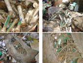 شكوى من إلقاء المخلفات الطبية بمدينة كفر الزيات بالغربية