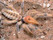 بريطانى يتخلص من شعوره بالخوف من العناكب بعد إزالة جزء من مخه