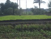 8 خدمات تقدمها مديرية الزراعة فى محافظة قنا