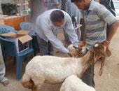 بيطرى أسيوط يعالج 4699 حيوانا ضمن العلاج الاقتصادى