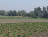 تعرف على حقوق العاملين بالجمعيات التعاونية الزراعية متعددة الأغراض