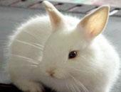 عبد الرحيم المرشدى يكتب: ذبح الأرنب