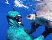 بالفيديو والصور.. ديلى ميل: سلحفاة تحضن غواصا أنقذها من شباك الصيد