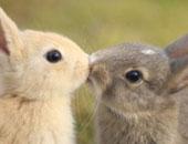 يشبه كورونا.. وباء فيروسى جديد قد يفتك بالأرانب فى ولايات أمريكية