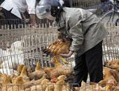 الزراعة تعلن تحصين 2.4 ملايين طائر ومعاينة 2199 مزرعة لمواجهة أنفلونزا الطيور