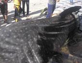 البيئة: رصدنا 11 هجوما لأسماك القرش منذ 2010 وحتى الآن
