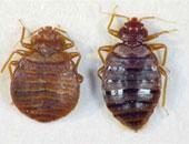 أصحاب الفنادق بالنمسا يستعينون بالكلاب البوليسية لمحاربة حشرة الفراش