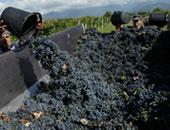 """""""الزراعة"""" تصدر حزمة إجراءات لزيادة انتاج محصول العنب.. تعرف عليها"""