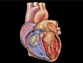 دراسة أمريكية:الضغوط النفسية ترفع خطر الإصابة بأمراض القلب بنسبة 36%