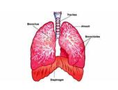 أفضل علاجات الالتهاب الرئوى.. حمام بخار وكوب زنجبيل