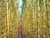 تعرف على 10 سلع غذائية مصر تحقق بها فائض إنتاج.. أبرزها الموالح وقصب السكر