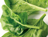 فيديو معلوماتى.. 4 أسباب صحية تضع السبانخ على عرش الخضروات الورقية