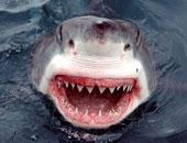 سمكة قرش تقتل رجلا قبالة شاطئ شهير بغرب أستراليا