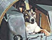 """فى ذكرى إطلاقها..7 معلومات لا تعرفها عن """"سبوتنيك 2"""" مركبة الكلبة لايكا"""