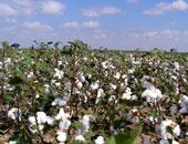زراعة المنوفية تنظم برنامجا تدريبيا لمحصول القطن خلال مارس الجارى