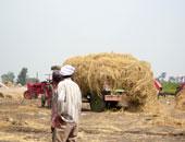 البيئة: 85% نسبة حصاد الأرز بالمحافظات.. وجمع 97 ألف طن قش