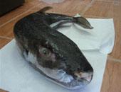 أخبار 24 ساعة.. الصحة تحذر من انتشار أسماك سامة فى الأسواق