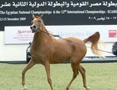 الزراعة: فتح الباب لمربي الخيول لتقديم طلبات التصدير إلى الخارج