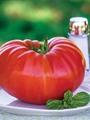 بالصور.. طرح أكبر ثمرة طماطم للبيع فى بريطانيا