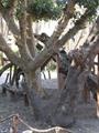 7 توصيات من البرلمان إلى الحكومة لتطوير شجرة مريم.. أبرزها تنقية البئر