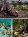 صورة طريفة للمواجهة بين الحيوانات تفوز بجائزة الحياة البرية لعام 2019