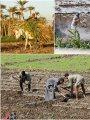 """للفلاحين فقط.. 10 نصائح مهمة من """"الفاو"""" للحفاظ على صحة الإنسان والحيوان"""