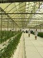 شعبة الخضراوات تتوقع هبوط الأسعار 20% بعد افتتاح الصوب الزراعية بقاعدة محمد نجيب