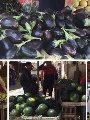 البطيخ والشمام يكذب هيومن رايتس ووتش