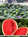 علماء بالمركز القومى للبحوث يحصلون على براءة اختراع لمنع عفن البطيخ.. صور
