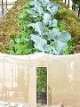 جانب من زراعة أسطح المنازل