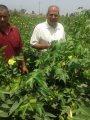 الدكتور محمد يوسف ،رئيس الإدارة  المركزية لشئون  مديريات الزراعة بقطاع  الخدمات الزراعية