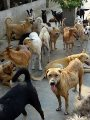 الزراعة: تحصين 692 كلبًا واستخراج 543 رخصة خلال 30 يوما