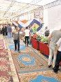 معرض سوبر ماركت أهلا رمضان يستقبل اليوم المواطنين بمدينة نصر