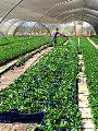 """""""الزراعة"""" تعلن الموافقة على تصدير 181 ألف شتلة لـ3 أصناف فاكهة إلى 3 دول"""