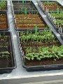 العلماء يتمكنون من زراعة 9 خضروات فى تربة المريخ والقمر.. تعرف عليها