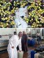 """10 إجراءات لـ""""الزراعة"""" لاستخلاص وإنتاج زيوت الطعام"""