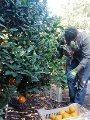 """9 إجراءات لـ""""الزراعة"""" أنقذت صادرات الخضر والفاكهة من التراجع بسبب كورونا"""