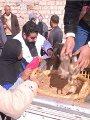 """التفاصيل الكاملة لقرض الـ20 بطة بالبحيرة.. توزيع 1700 بطة كقرض لـ85 أسرة بالقرى الأكثر احتياجا تحت شعار """"قرية بحراوية منتجة"""".. والمحافظ: المشروع يستهدف تحقيق التنمية ورفع مستوى محدودى الدخل وضبط أسعار الطيور"""