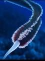 الكائن البحرى