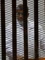 السجن المشدد20 عامًا لمرسى والعريان والبلتاجى بقضية الاتحادية (تحديث)