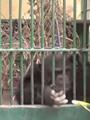 """من قتل القردة """"موزة"""" وترك """"كوكو"""" وحيدًا.. أساتذة جامعة القاهرة يتهمون """"القومى للبحوث"""" بارتكاب الواقعة.. والمركز يرد: اتهمونا بذلك لأنهم لم يتوصلوا لنفس نتائجنا لعلاج السرطان بالذهب"""