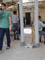 جامعة عين شمس: تركيب بوابتين مصفحتين للحرم الرئيسى للجامعة