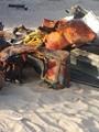 ننشر فيديو وصور آثار مصرع وإصابة 74 شخصًا بحادث شرم الشيخ