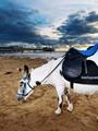 """بالصور..أول حمار يستأجر بـ""""الفيزا"""" للتنزه على الشاطئ فى بريطانيا"""
