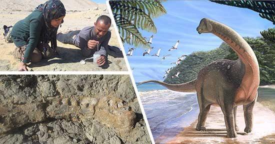 المصريون يكتشفون منصوراسوروس ديناصور فى حجم حافلة مدرسية عاش فى أفريقيا قبل 80 مليون سنة وزنه 5 5 طن وطوله 10 أمتار والحفريات تسلط الضوء على حلقة مفقودة فى تاريخ الديناصورات وتكشف صلة
