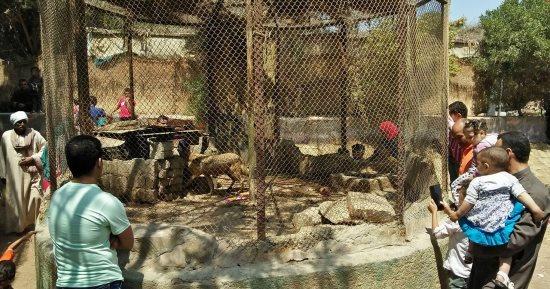 تعرف على خريطة أماكن الحيوانات المفضلة لزوار عيد الفطر بحديقة حيوان الجيزة اليوم السابع